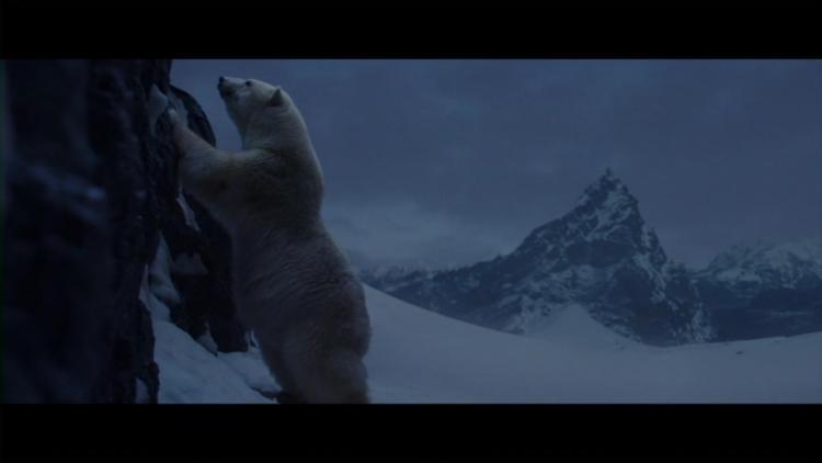 Arctic (40)